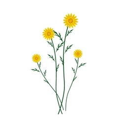 Yellow daisy blossoms on a white background vector