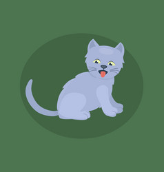 cat breed cute kitten gray pet portrait fluffy vector image vector image