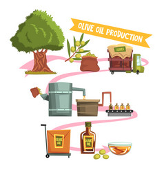 Process of olive oil production from cultivation vector