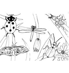 Kid style ink drawing meadow objects plants vector