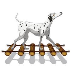 dalmatian dog crossing the bridge vector image