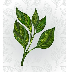 Green tea sprout vector
