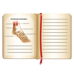 Foot muscles and tendons on page vector
