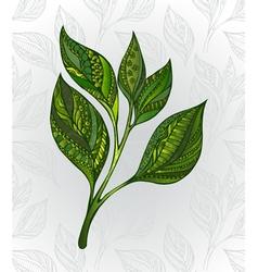 Green tea sprout vector