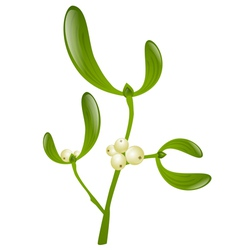 Mistletoe vector