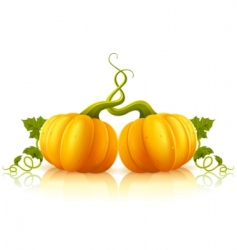 Orange pumpkins  vector