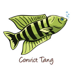 Convict tang color vector