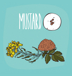 set of isolated plant mustard seeds herb vector image vector image