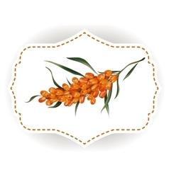 sticker natural buckhorn berry vector image