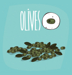 set of isolated plant olives fruits herb vector image vector image