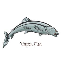 Tarpon color vector