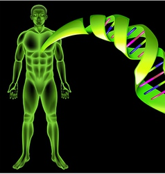 Male Human DNA vector image