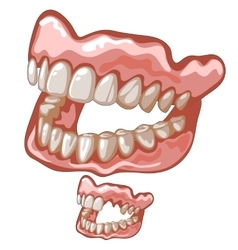 Funny dentures with white natural-looking teeth vector