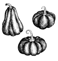 Ink drawing pumpkins vector