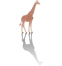 Giraffe with shadow vector image