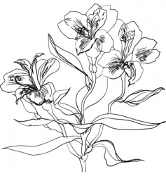 alstrameriya vector image