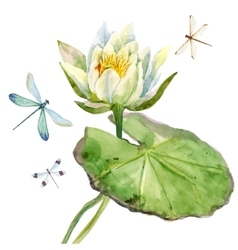 Watercolor lotus flower vector image vector image