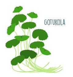 fresh gotukola on withe backgruond vector image