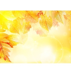 Autumn foliage background vector