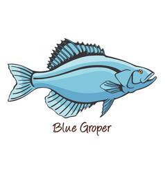 Grouper color vector