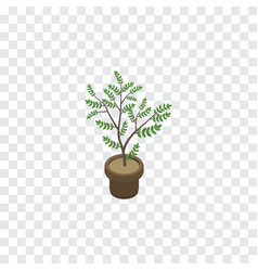 isolated houseplant isometric fern element vector image