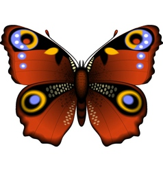 Summer butterfly vector