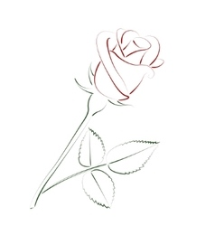 Beautiful sketched rose vector