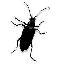 Cerambyx scopolii vector