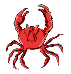 crab animal from ocean vector image