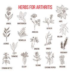 herbs to fight arthritis boswellia willow celery vector image