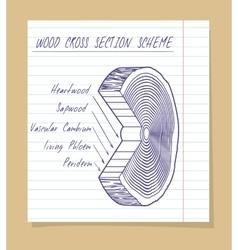 Wood cross section scheme sketch vector