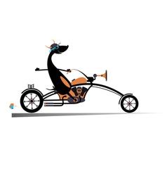Biker dog vector image