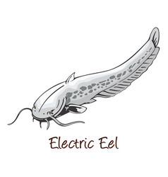 Electric eel color vector