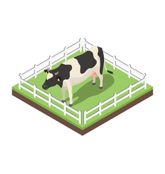 Isometric 3d of cow vector image vector image