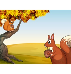 Squirrels with nuts in the hill vector image vector image