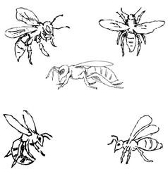 flies sketch by hand pencil drawing vector image