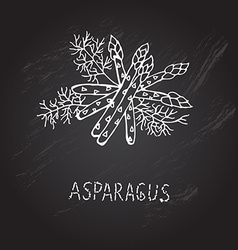 Hand drawn asparagus vector