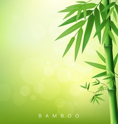 Bamboo green leaf vector image