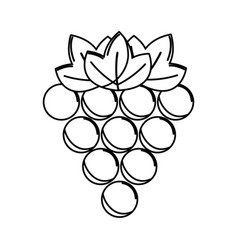 Silhouette grapes fruit icon image vector