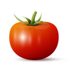 whole tomato vector image