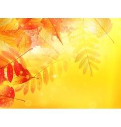 Autumn foliage background vector image