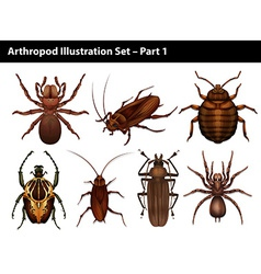 Set of insects vector