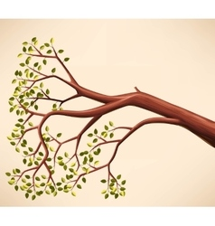 Tree branch with green leaves vector