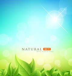 Green leaf natural vector image