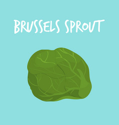 fresh brussels sprout on blue balckground vector image