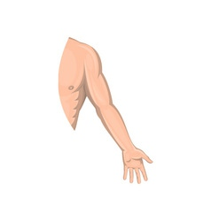 Human male arm left side vector