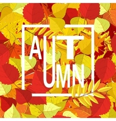 Autumn background orange yellow fall leaves and vector