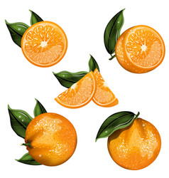 orange fruit isolated set vector image vector image