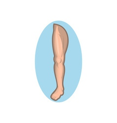 Human leg facing front vector