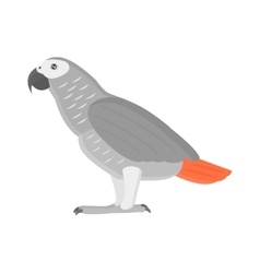 Cartoon parrot isolated bird vector